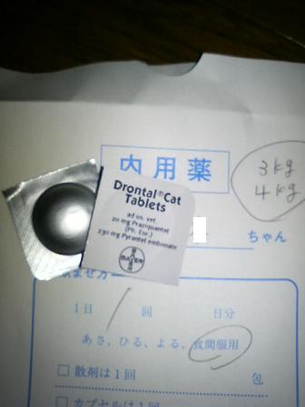20090327 (7).JPG