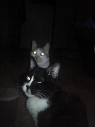ワレワレは宇宙猫!