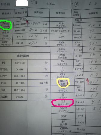 糖尿病宣告 2.JPG